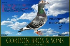 IHU15N02023 Pied Piper Gordon Bros