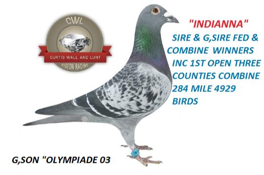 IndiannaCWL-(3)