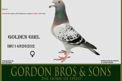 WO IHU14N26202 GOLDEN GIRL Gordon Bros