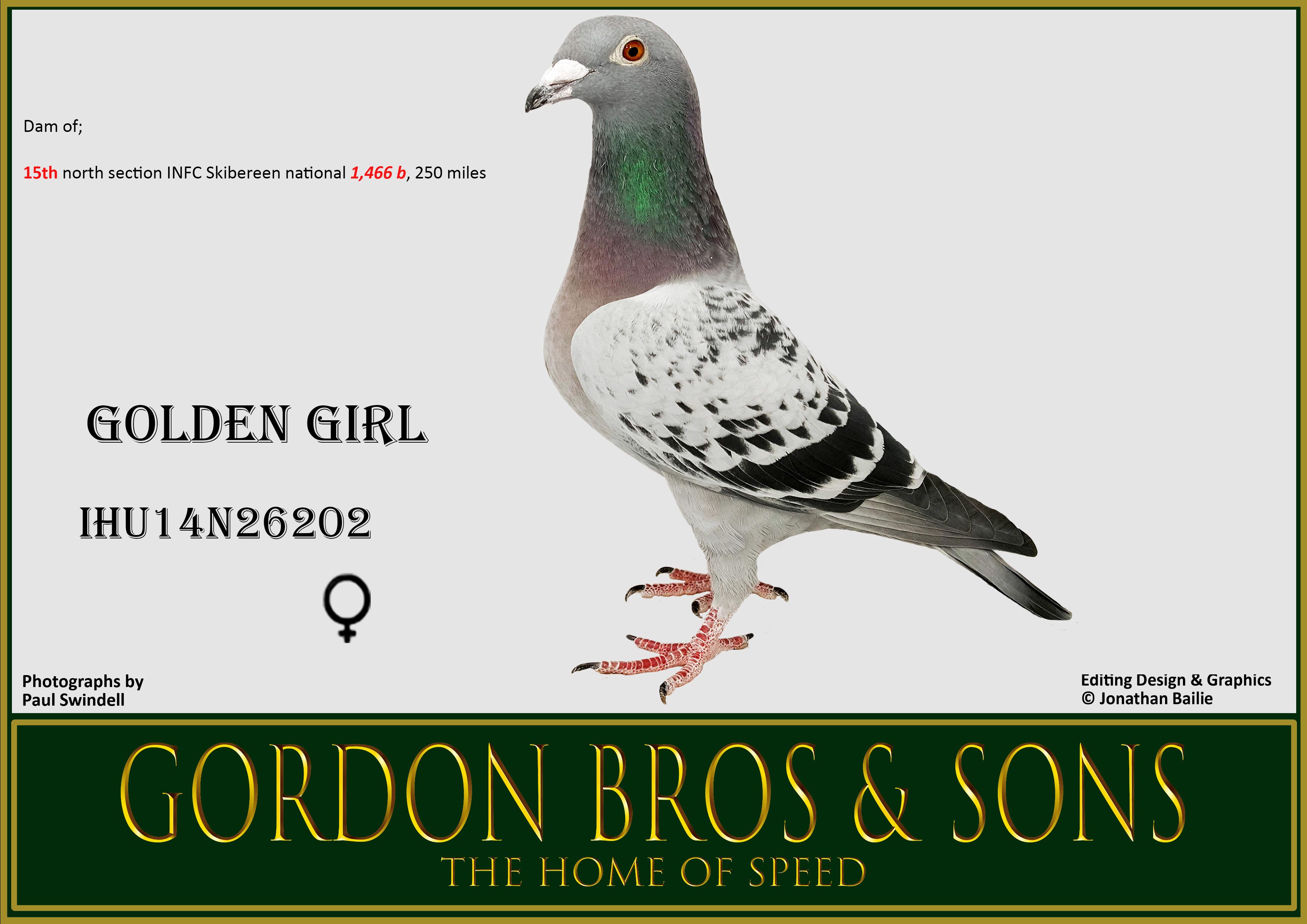 WO IHU14N26202 GOLDEN GIRL Gordon Bros