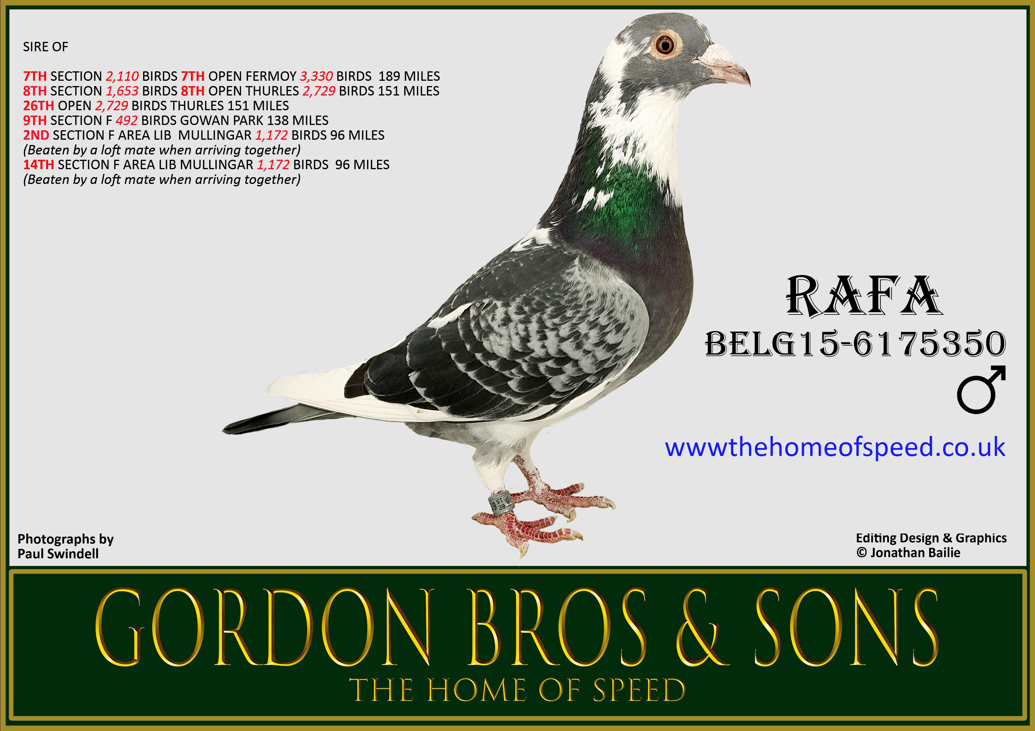 RAFA BELG15-6175350