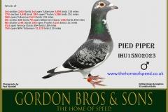 Pied Piper IHU15N02023