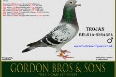 TROJAN Belg14 6264324